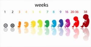 Schwangerschaftswochen