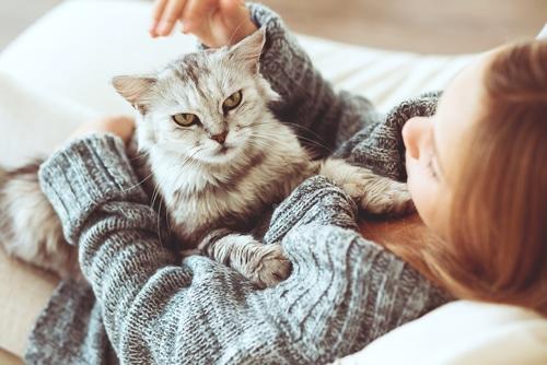 schwanger und Katze